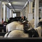 Ponnyerna är tillbaka från sin uteritt